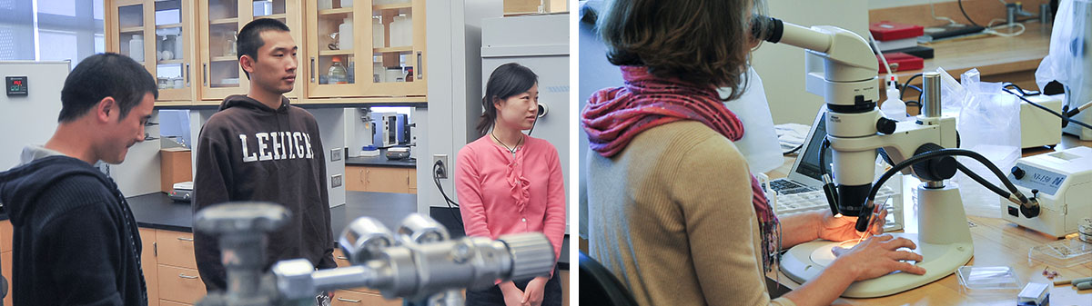 Lehigh University Science and Environmental Writing Program - Slider montage, looking into microscope